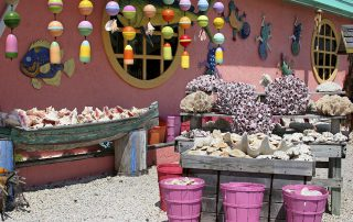 Sea shells display in the Florida Keys. Opens in a photo gallery pop out.